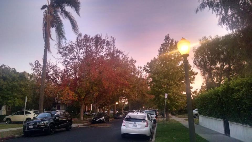 The fall, who all of the sudden surprised me with its colors, but never defeated California sun.